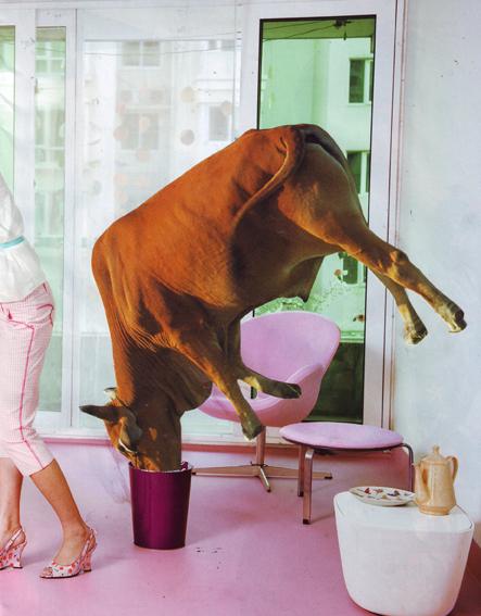 a_suicidial_home_cow.jpg